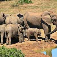 Elephant Parenting