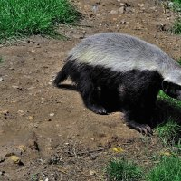 Toddlers are honey badgers